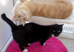 ali-cats-2-cats (Small)