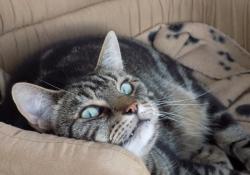ali-cats-4