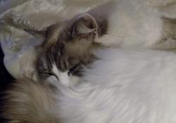ali-cats-6